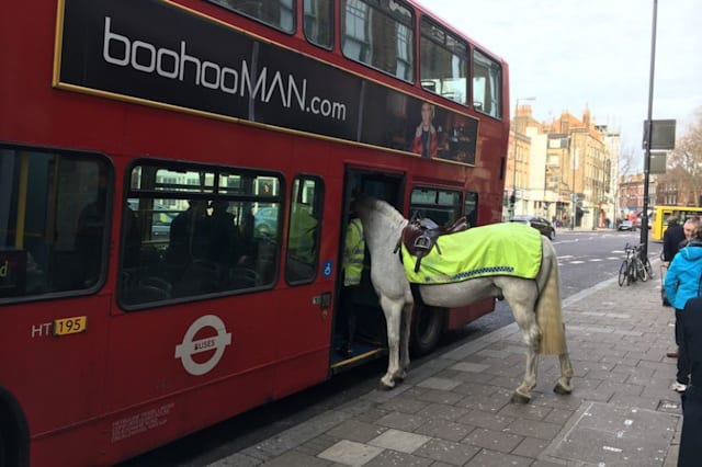 Horse spotted getting on a London bus
