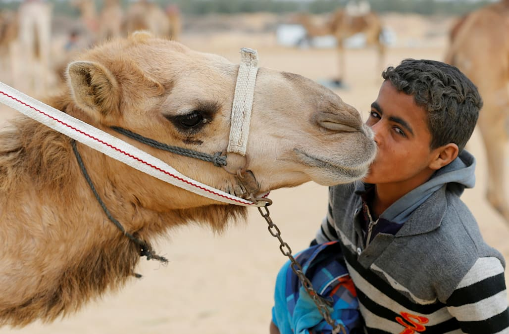 Egypt camel racers hope desert sport will spread to fresh pastures