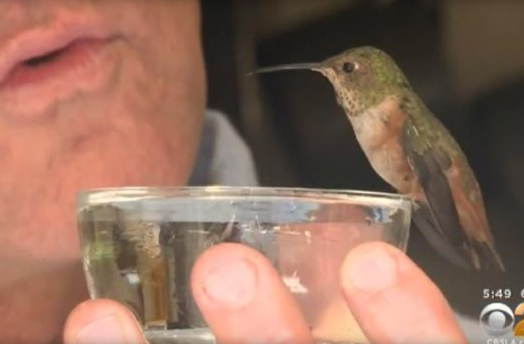 hummingbird and dog who helped save her are inseparable - aol news, Fish Finder