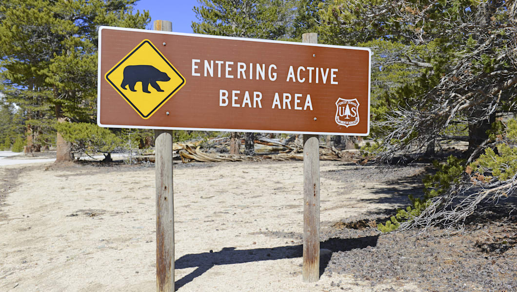 Bear Warning Sign in the Wilderness