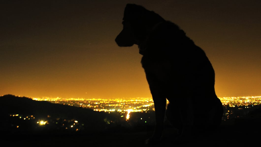 Silhouette of dog with view of city, Los Angeles, California, US.