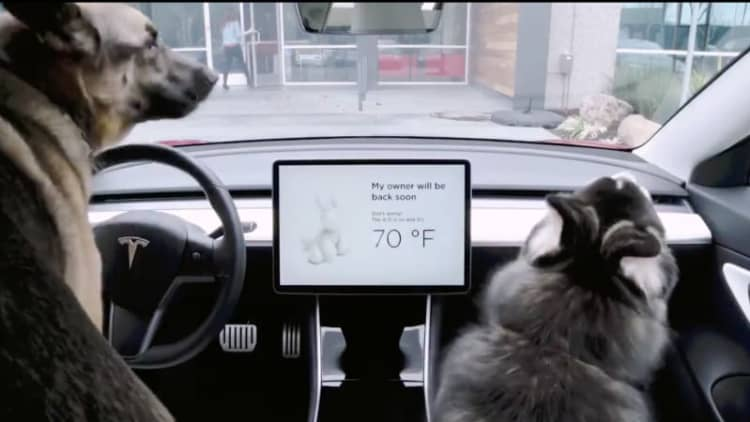 Tesla rolls out guarding Sentry Mode and cooling Dog Mode