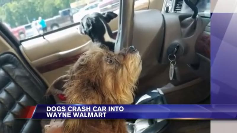 West Virginia dog crashes owner's car into local Walmart