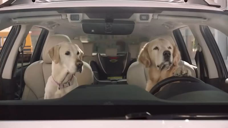 Just a video of dogs driving Subarus