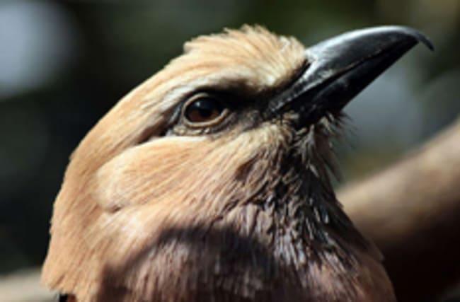 London Zoo shuts down bird enclosures over avian flu worries