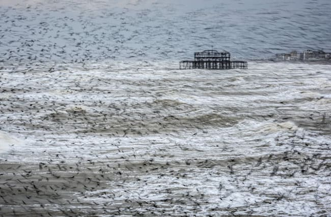 'Tornado' of starlings wins landscape photography prize