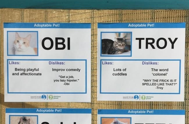 Cats get hilarious personalities to help find new homes