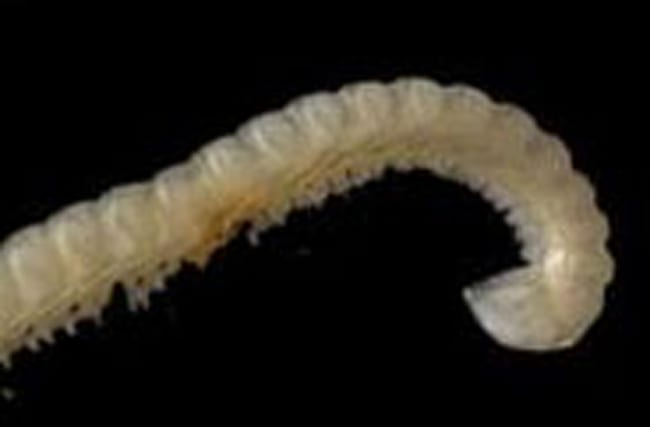 New insect species which shoots poison found in Spain