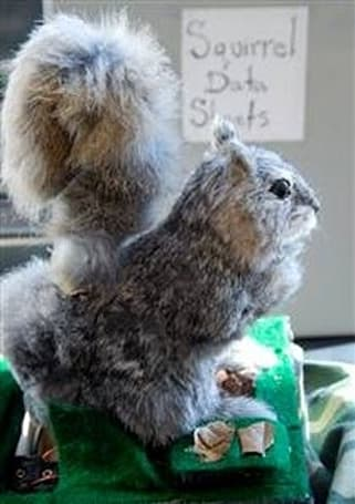 Scientists make a real-life mechanical squirrel