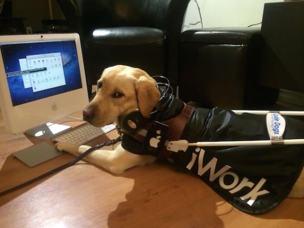 Dog Days of Summer: Zandra, hard at iWork