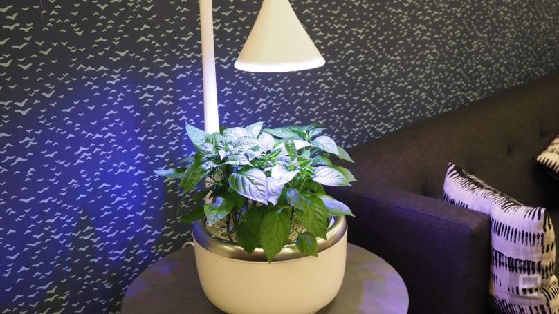 The SproutsIO smart microgarden nurtures your inner botanist