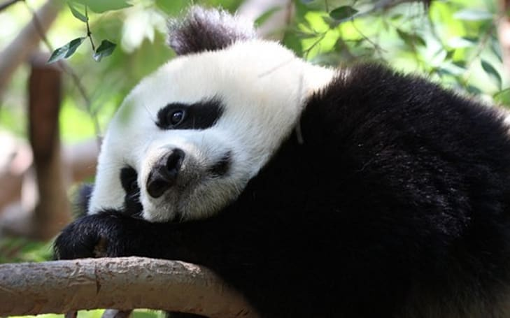 Analysts: Mists of Pandaria sales disappointing