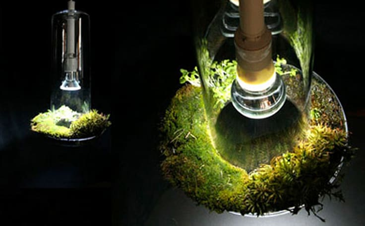 Green Light device purifies air using plantlife