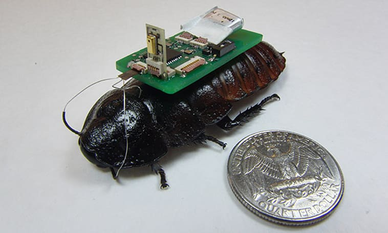 Cyborg cockroaches can help find survivors through their voices
