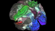 Scientists map human brain in more detail than ever before