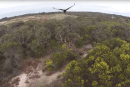 Eagle takes umbrage with interloping drone