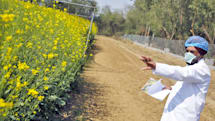 National Academy of Sciences finds GMOs to be 'safe'