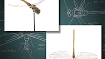 CIA dragonfly drone almost beat modern UAVs by 40 years, was swatted (video)