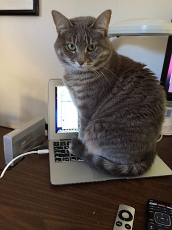 Caturday: Peek around the Rosie