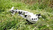 Salamander robot can walk, crawl and swim like the real deal