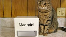 Tabby is not impressed with the Mac mini