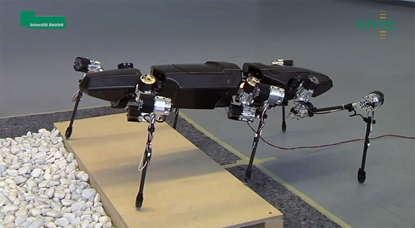 Watch the first steps of a robot inspired by stick bugs