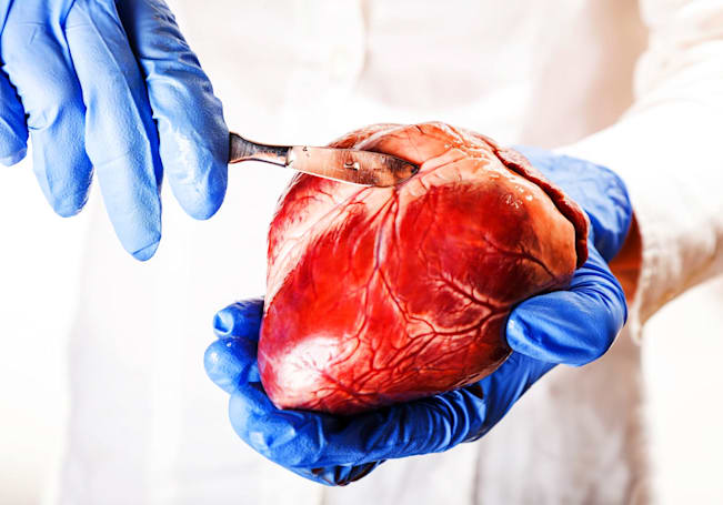 Scientists recreate the outer layer of the heart with stem cells