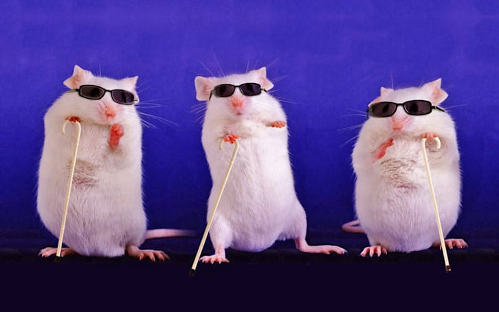 Scientists partially restore blind mice's eyesight