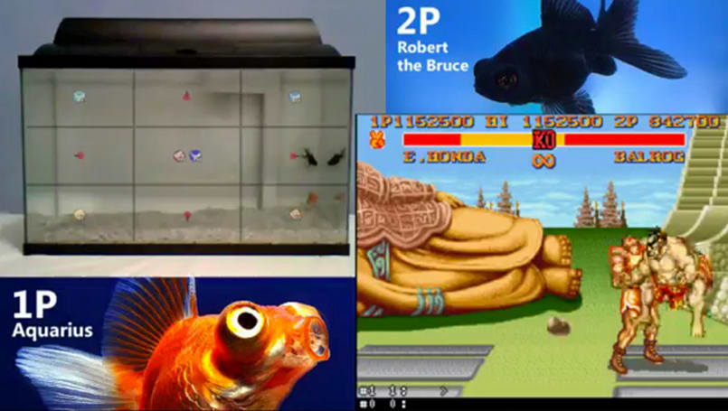 Watch two fish duke it out in 'Street Fighter' on a live internet stream
