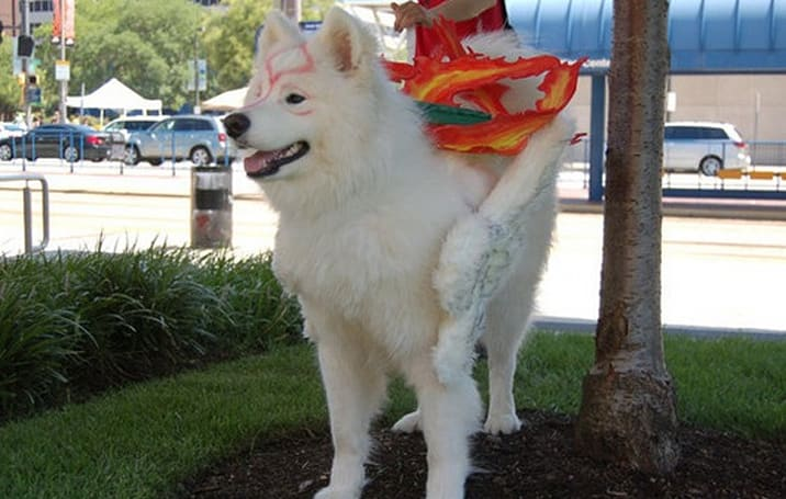 Good morning, here's a dog dressed as Amaterasu
