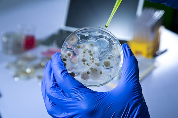 Scientists dream up a power station staffed by bacteria