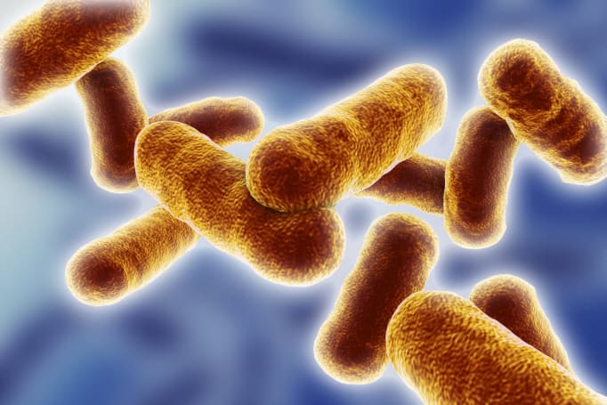 Gene-modified soil bacteria promise eco-friendly computing