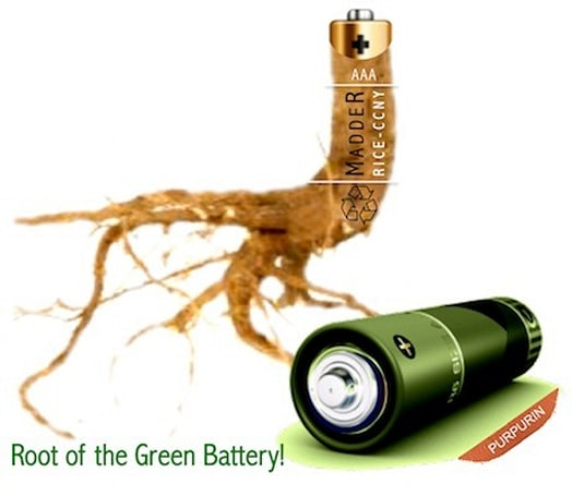 Scientists develop eco battery powered by root-extracted dye