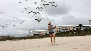 Why You Should Never Feed Seagulls