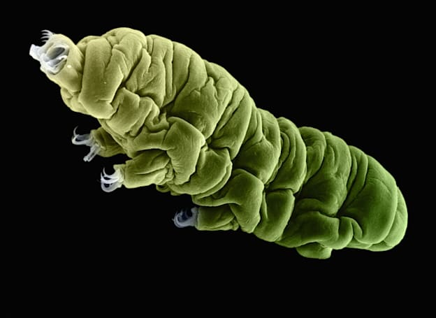 'Water Bear' protein could shield human DNA from radiation