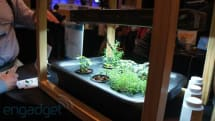 Bitponics personal gardening assistant eyes-on (video)