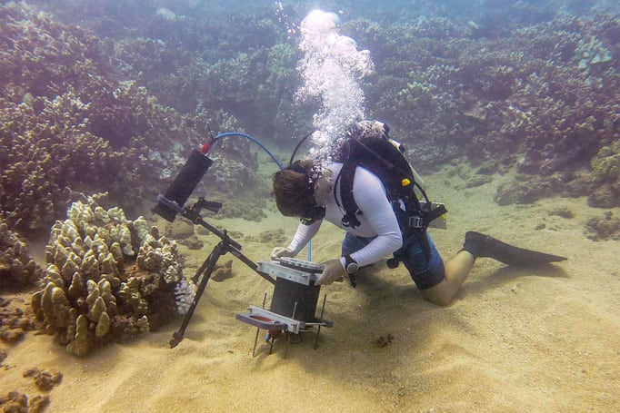 Underwater microscope offers a brand new look at sea life