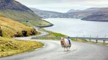 Sheep View 360: Wie Street View, bloß mit Schafen