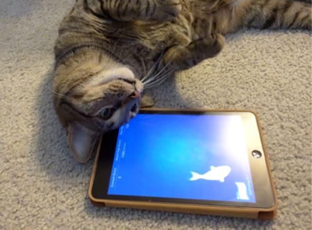 My cat Cinnamon reviews Friskies Cat Fishing 2