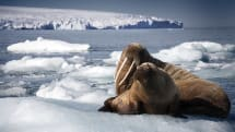 BBC nature series 'Blue Planet' will return later this year