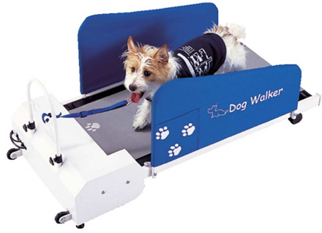 Doggy treadmill gets your pup in shape