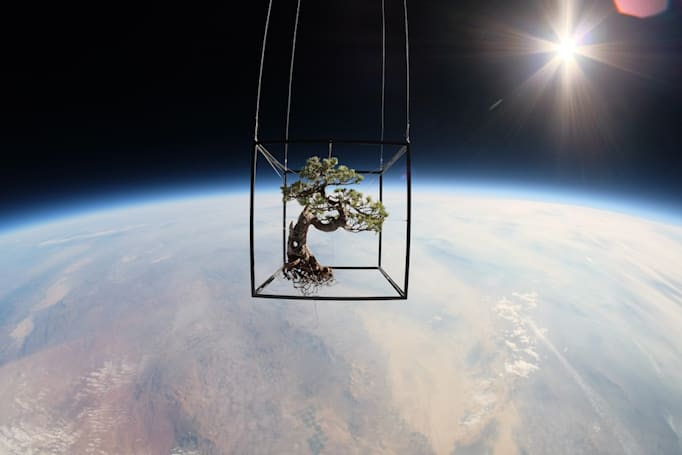 The Big Picture: Exobiotanica, a bonsai tree in space