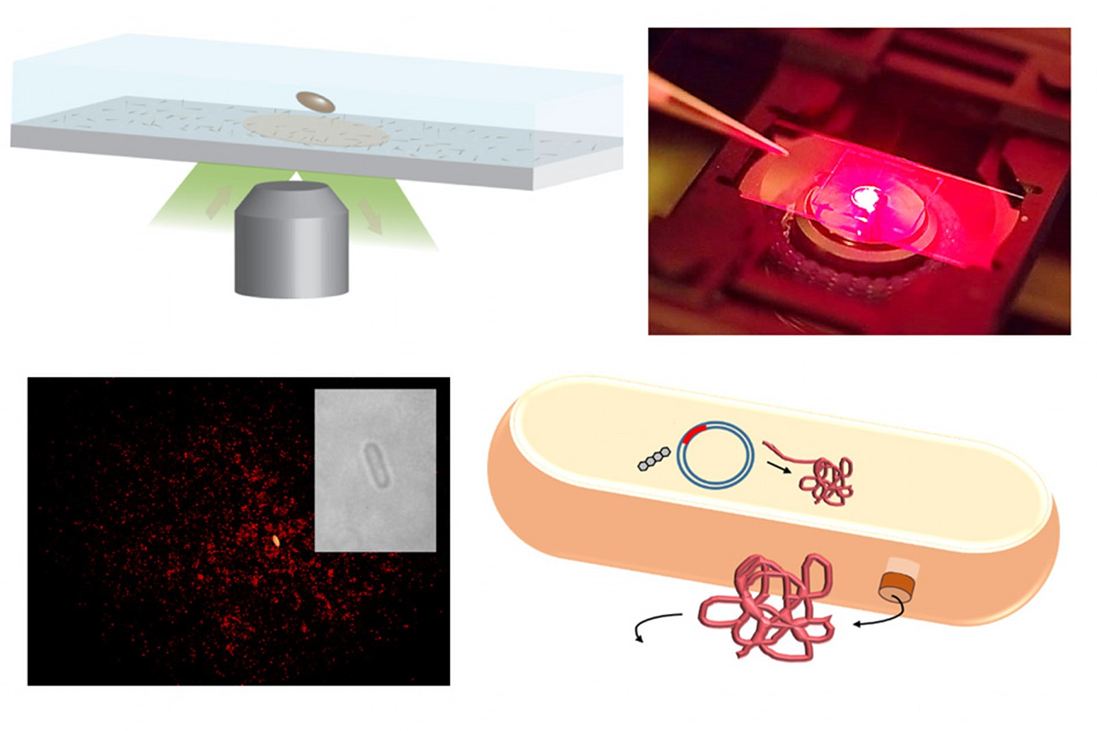 Researchers design sensors that can detect single protein molecules