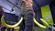 Humanity is on the cusp of de-extincting the Wooly Mammoth