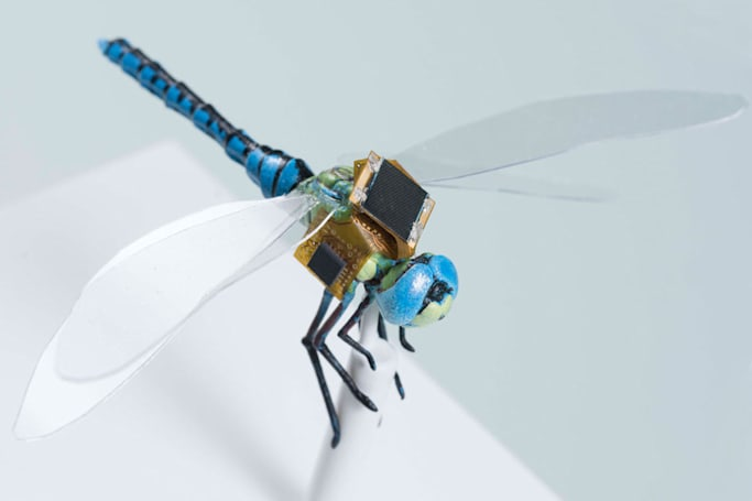 Scientists are making genetically modified cyborg dragonflies