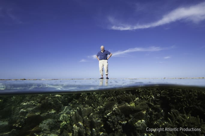 Google can take you on a VR trip to the Great Barrier Reef