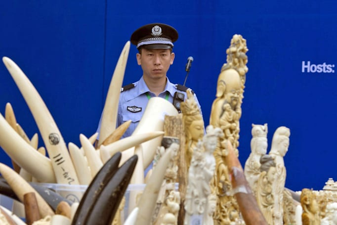 Ebay, Etsy, Microsoft and others vow to ban illegal wildlife trading
