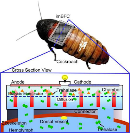 Self-powered cyborg cockroaches are coming