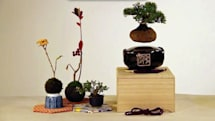 Floating Bonsai trees are better than floating speakers
