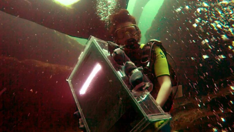 This artist waterproofed a scanner to create stunning ocean art